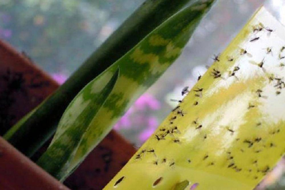 В горшках с орхидеями живут мелкие мошки, как от них избавиться?