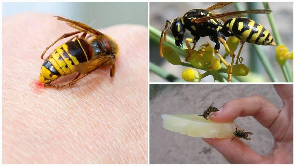Через сколько проявляется аллергия после укуса осы