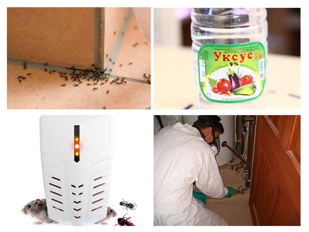 Чем обработать пеноплекс от муравьев