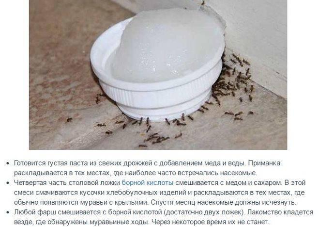 Как избавиться от муравьёв в частном доме: химические и народные средства
