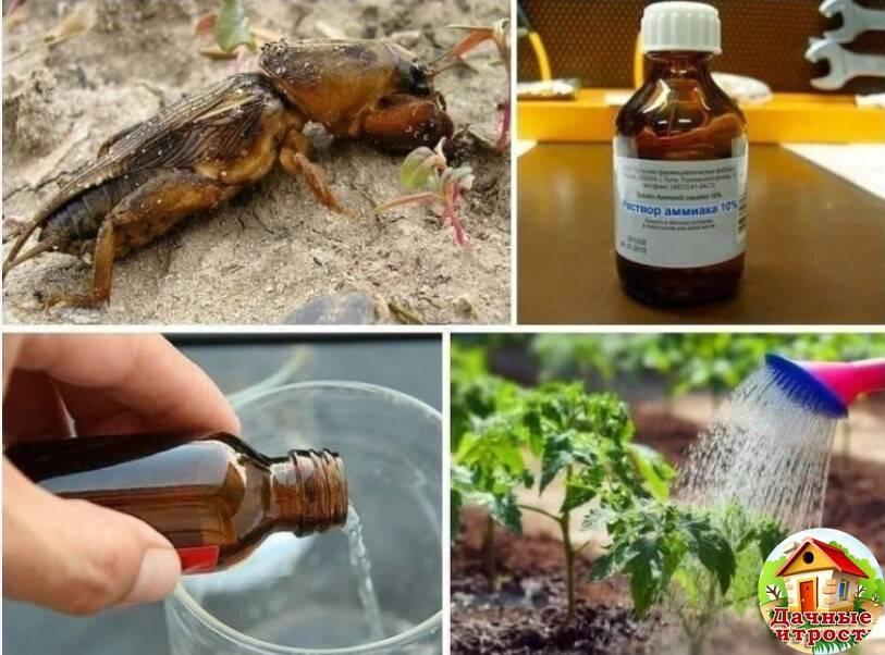 Нашатырный спирт от тараканов в квартире: рецепты, отзывы, принцип действия, безопасность