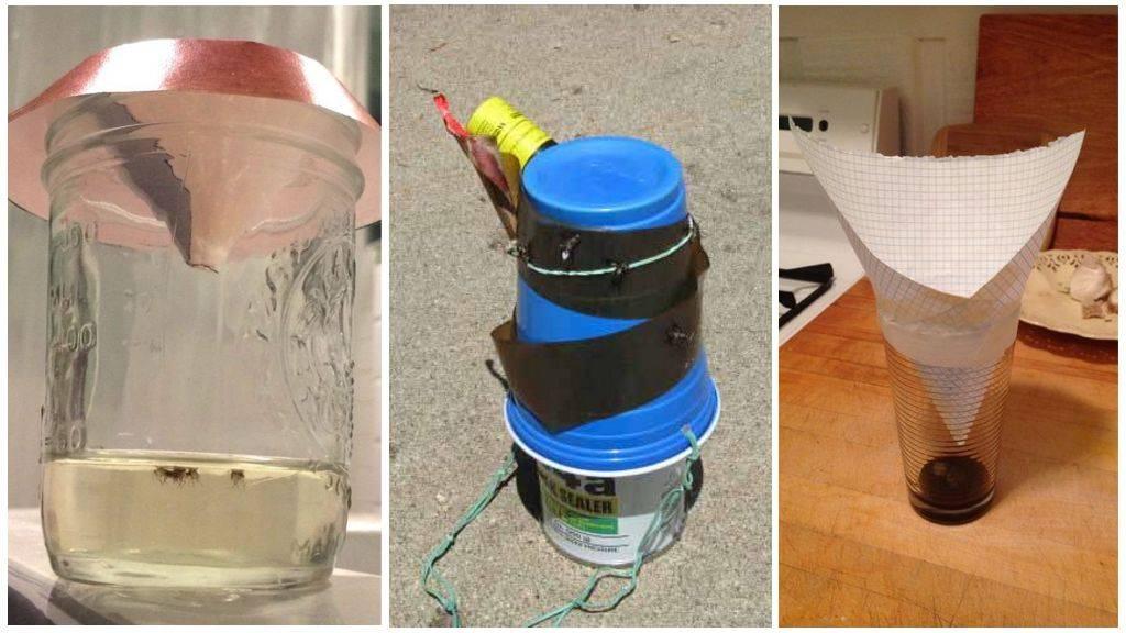 Как сделать ловушку для мух своими руками в домашних условиях