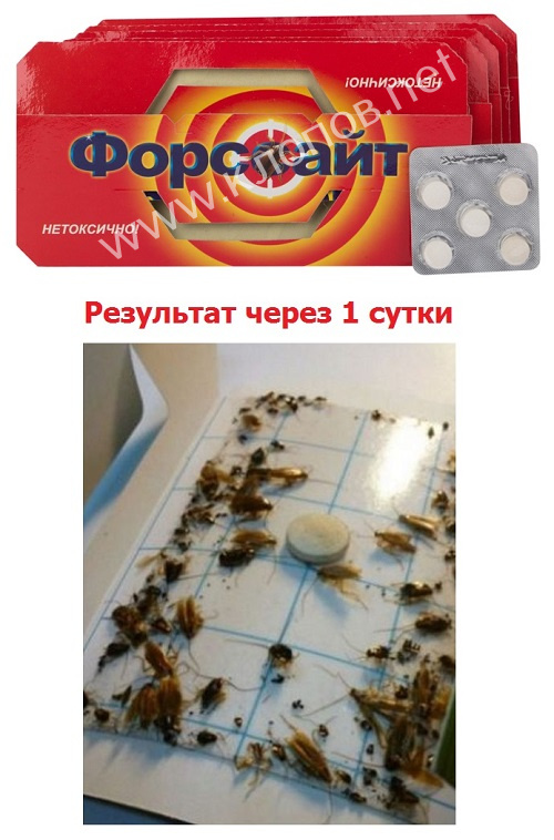 Форссайт: эффективное средство в борьбе с тараканами