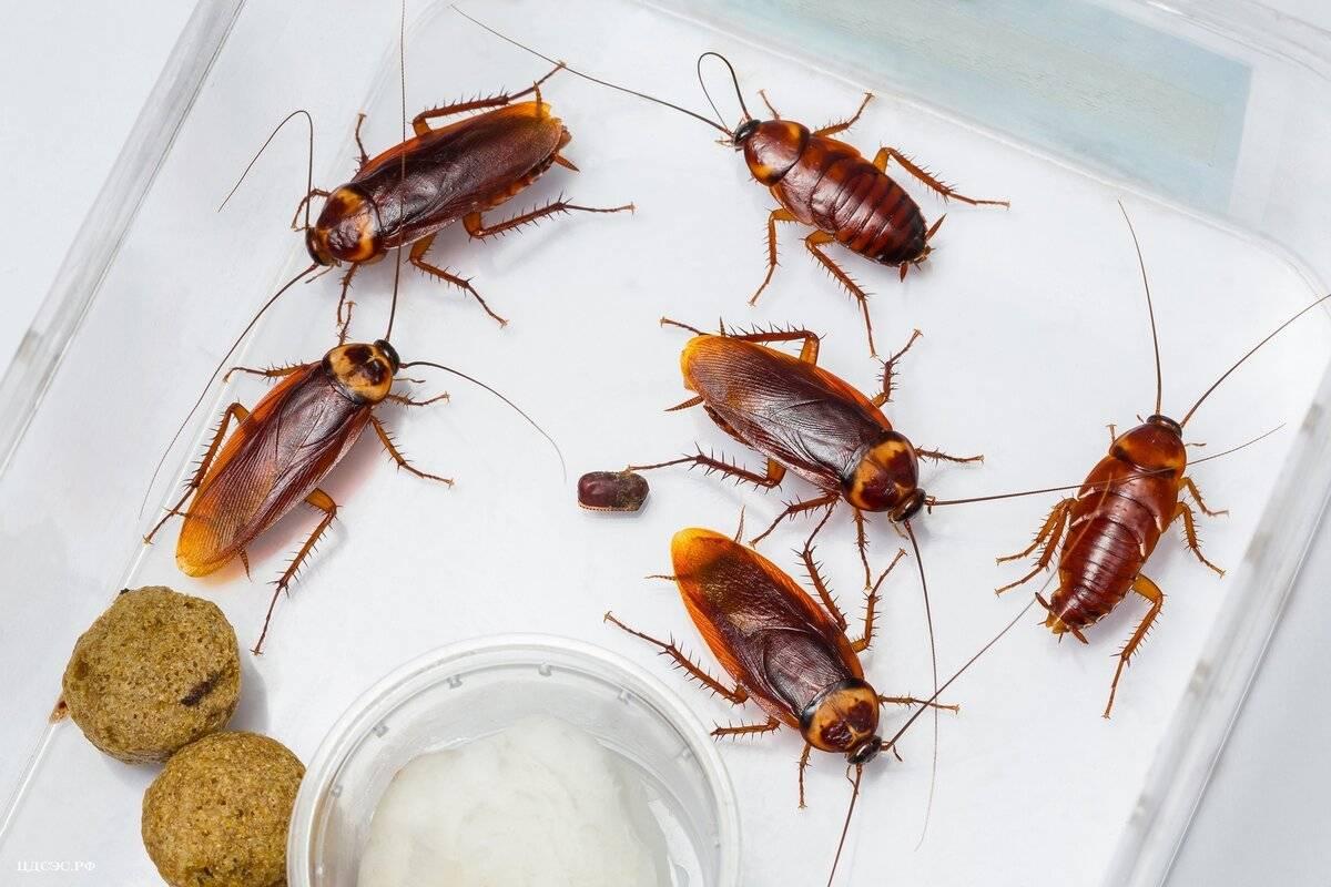 Летающие тараканы