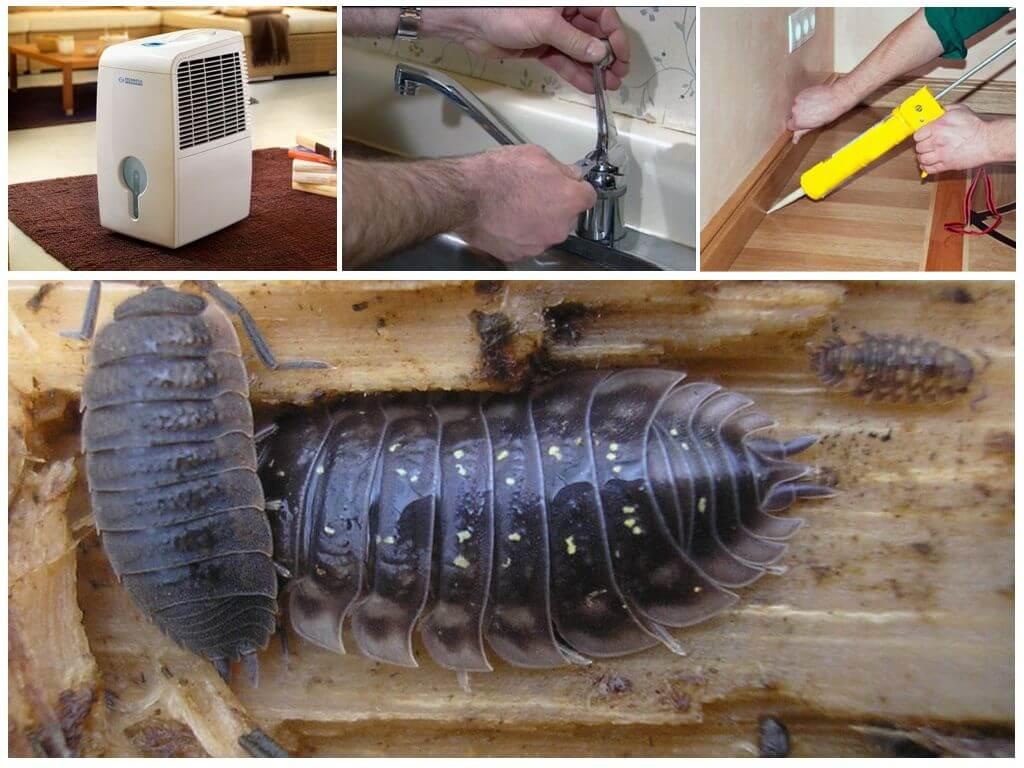 Мокрица в ванной комнате и туалете: как избавиться от домашних насекомых самим и вывести их народными средствами, как бороться с помощью химикатов, а также фото selo.guru — интернет портал о сельском хозяйстве