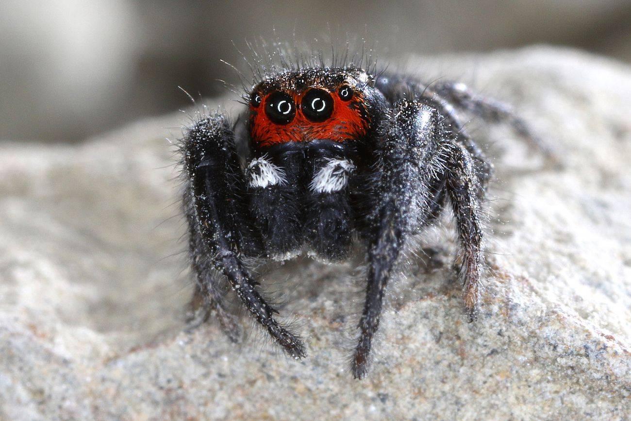 Самые необычные пауки нашей планеты. топ-5 мест
