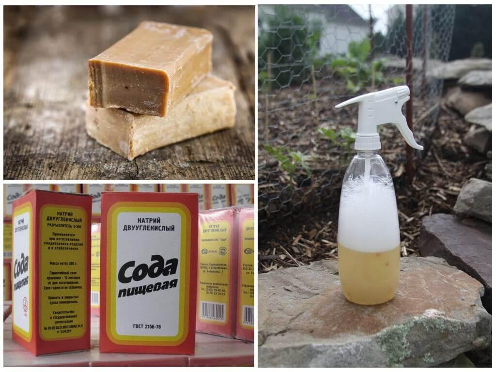 Сода от тли на смородине: растворы для борьбы с вредителем