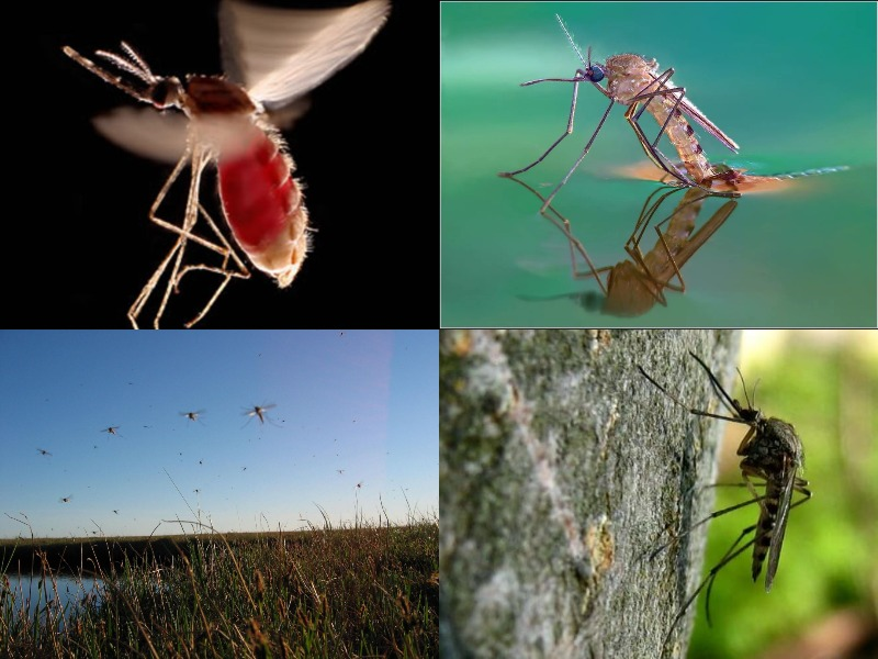 В каких странах и городах нет комаров