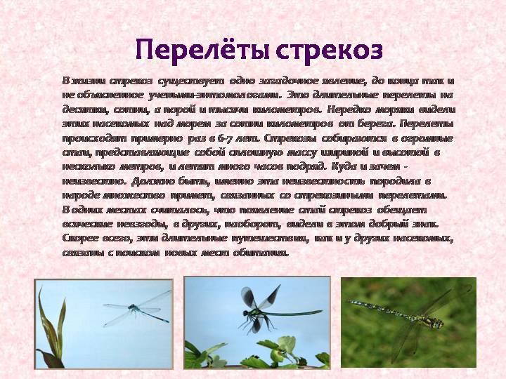 Дедка желтоногий: истребитель комаров и мошек у крупных рек