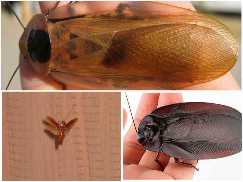 Кто есть тараканов: входят ли в этот список люди, какие животные это делают в природе и в квартире