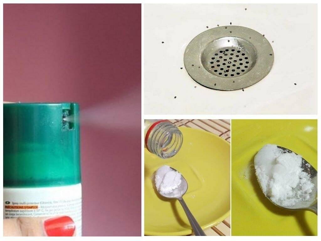 Как быстро избавиться от надоедливых мошек на кухне