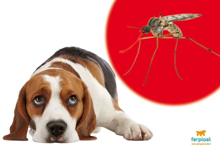 Чем обработать собаку от комаров и мошек. что делать, если собаку покусали комары и мошки