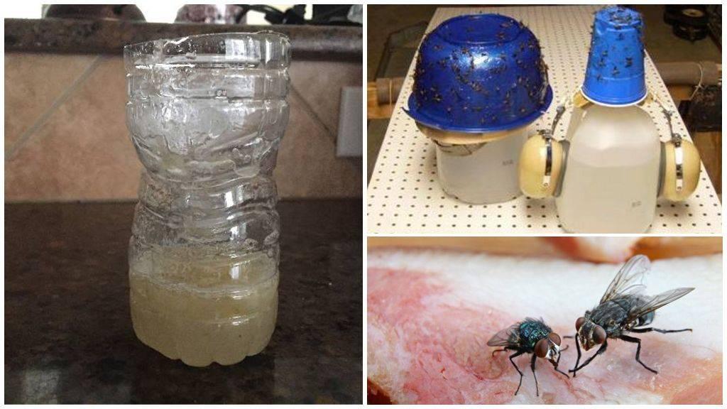 Ловушка для мух своими руками: чем приманить насекомых