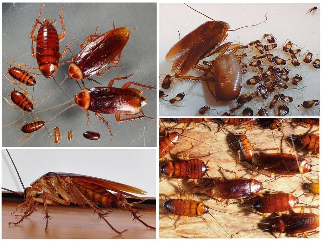 Что делать, если в квартире завелись тараканы - вместе