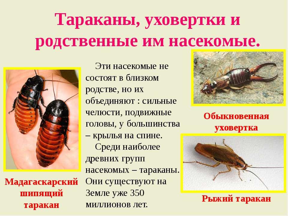 Многообразие насекомых: чем строение таракана может удивить?