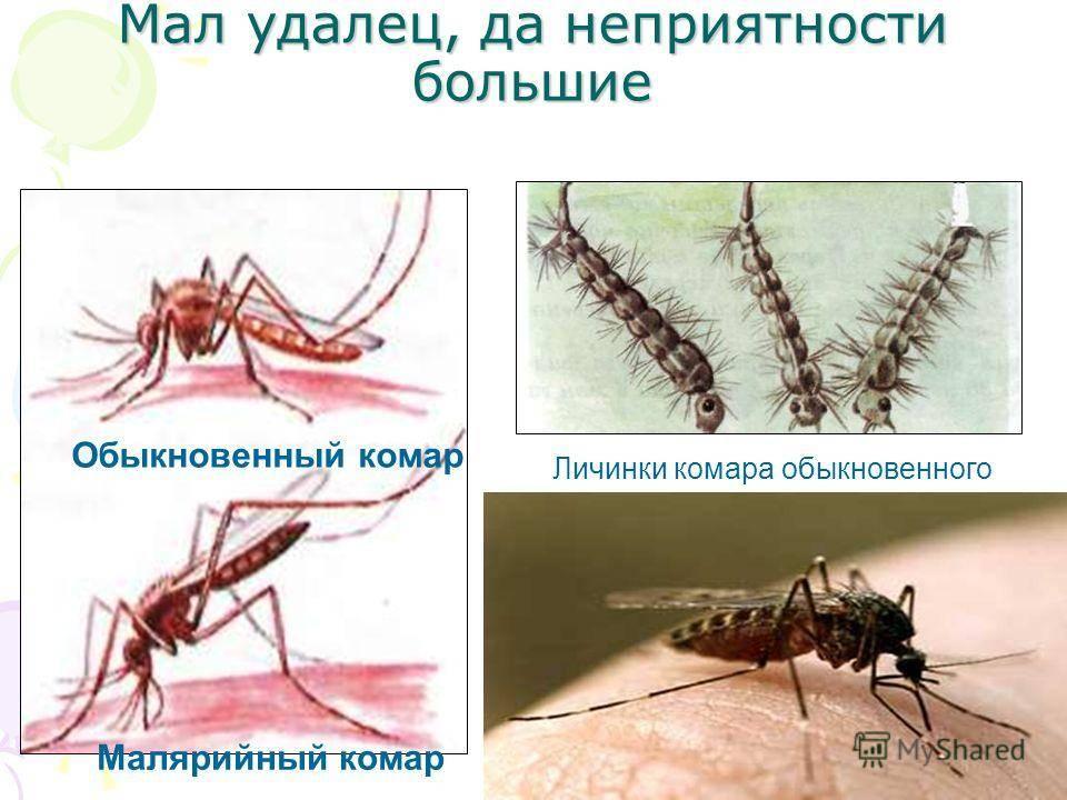 Укус комара: как спастись от назойливых насекомых?