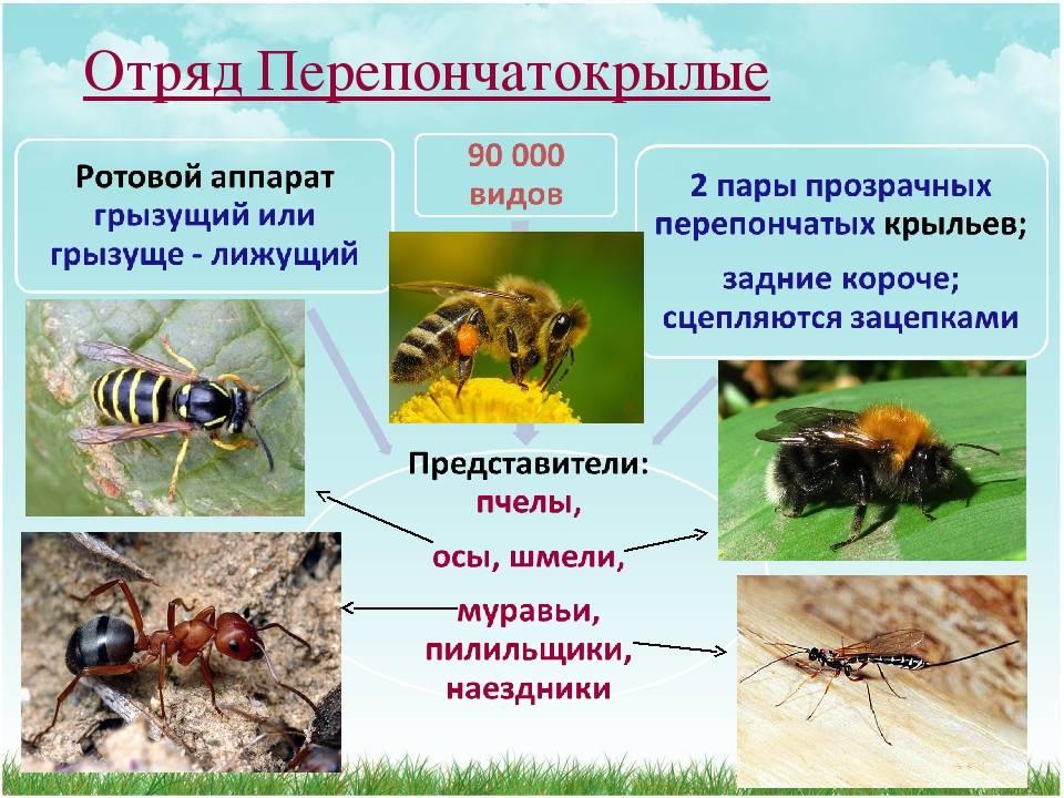 Осы в квартире – простые способы уничтожения насекомых