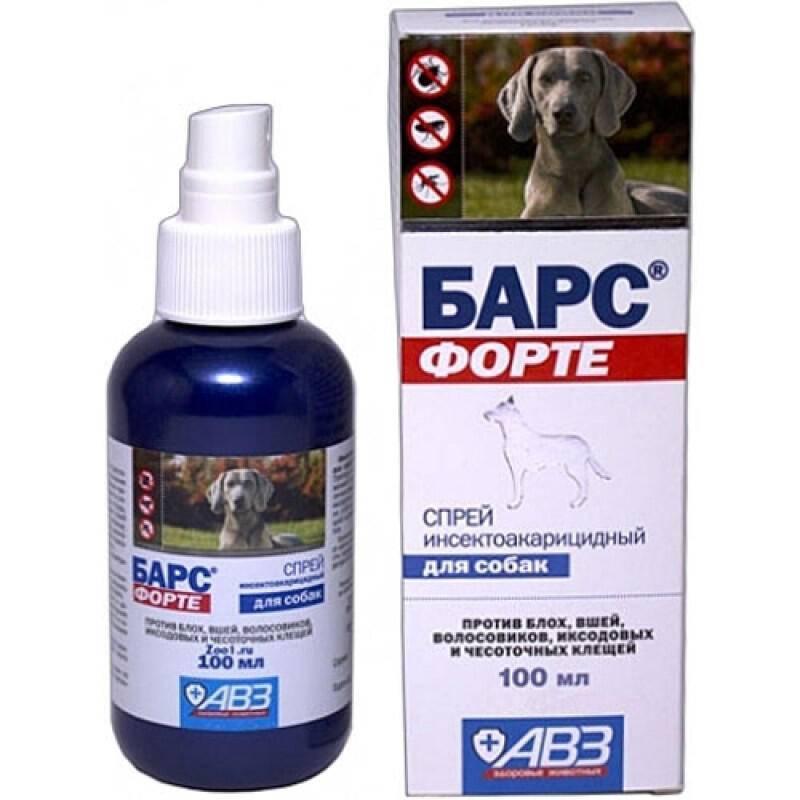 Что выбрать от клещей для собак, какие лекарства, спреи, таблетки?