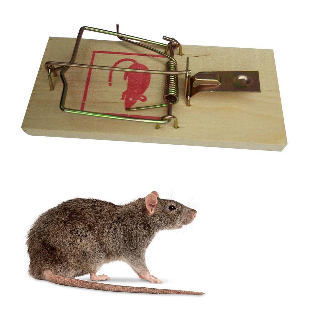 Эффективные способы поймать крысу в домашних условиях