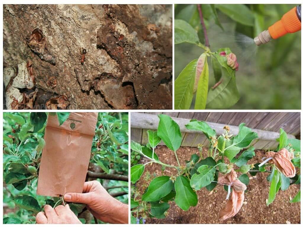 Как бороться с тлей на плодовых деревьях (яблоне, сливе, вишне): чем обработать, лучшие средства
