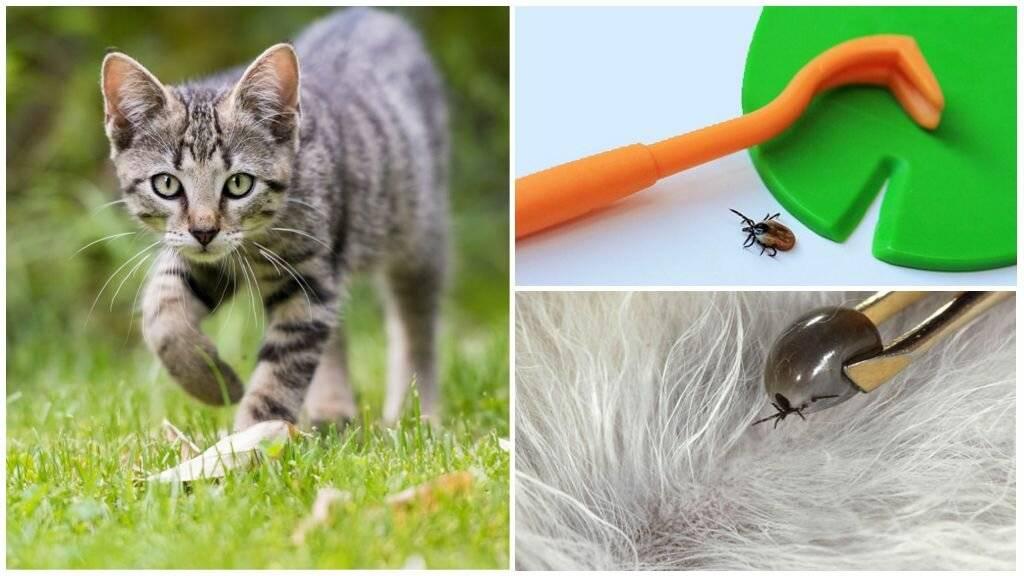 Что делать, если кошка съела резинку