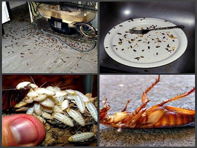 Что будет, если съесть таракана