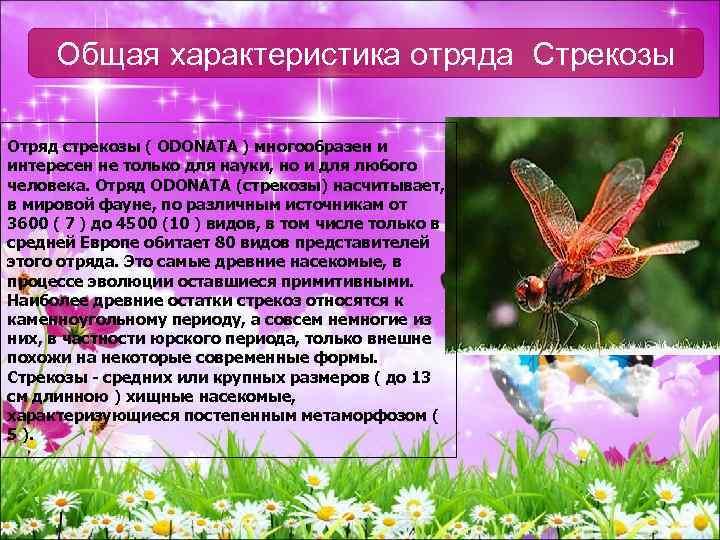 Рыжая стрекоза: описание и особенности развития распространенного европейского вида