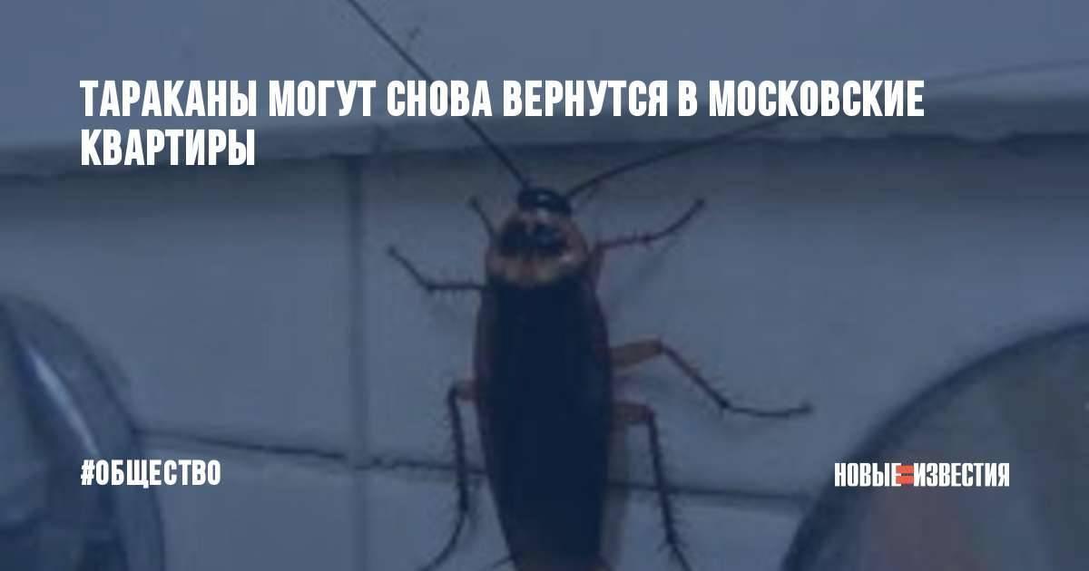 Куда ушли тараканы: стоит ли начинать беспокоиться