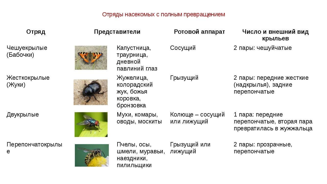 Виды тараканов в россии; декоративные и экзотические тараканы