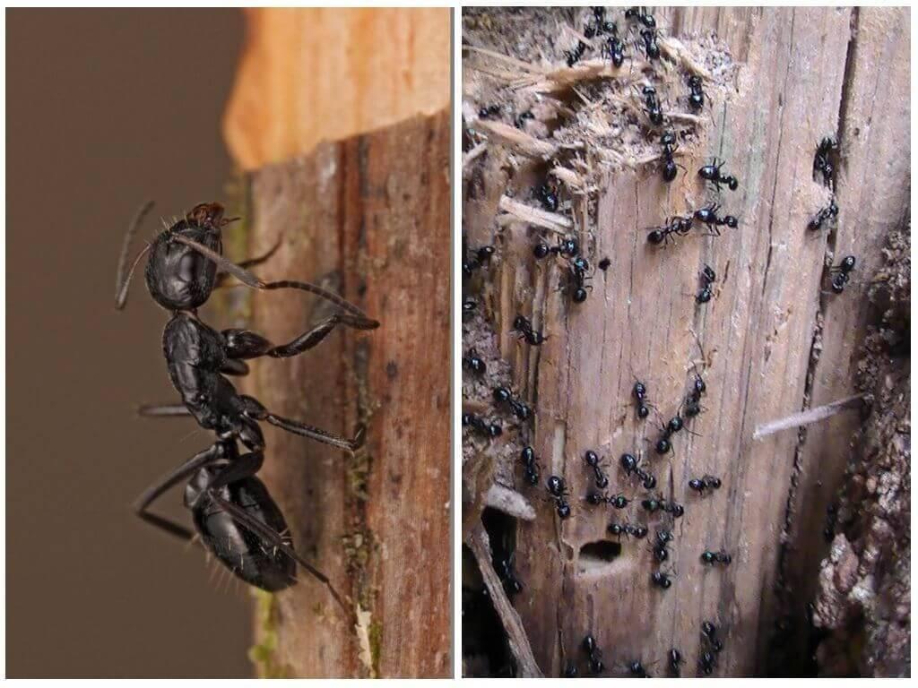 Кто питается муравьями