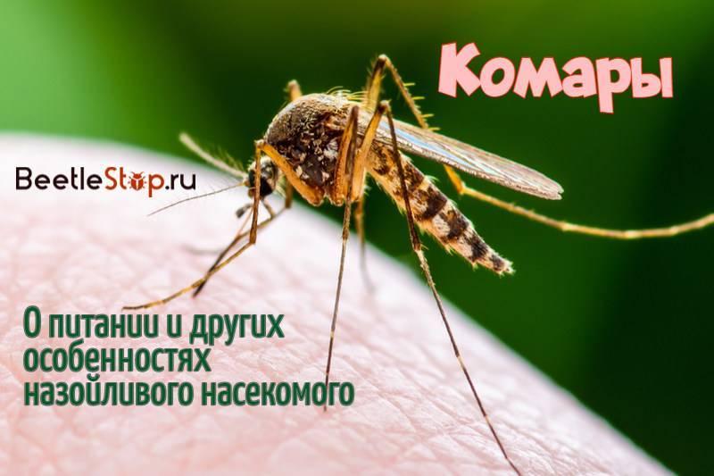 Чем питается комар? Обзор предпочтений насекомого в зависимости от пола и стадии развития