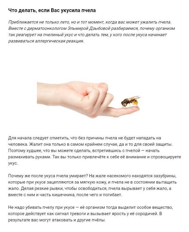 Что делать, если укусила пчела: как снять отёк, первая помощь в домашних условиях, польза и вред от укуса + фото