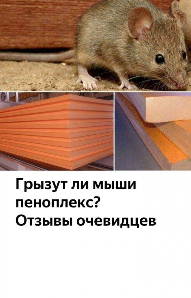 Грызут ли мыши пенополистирол