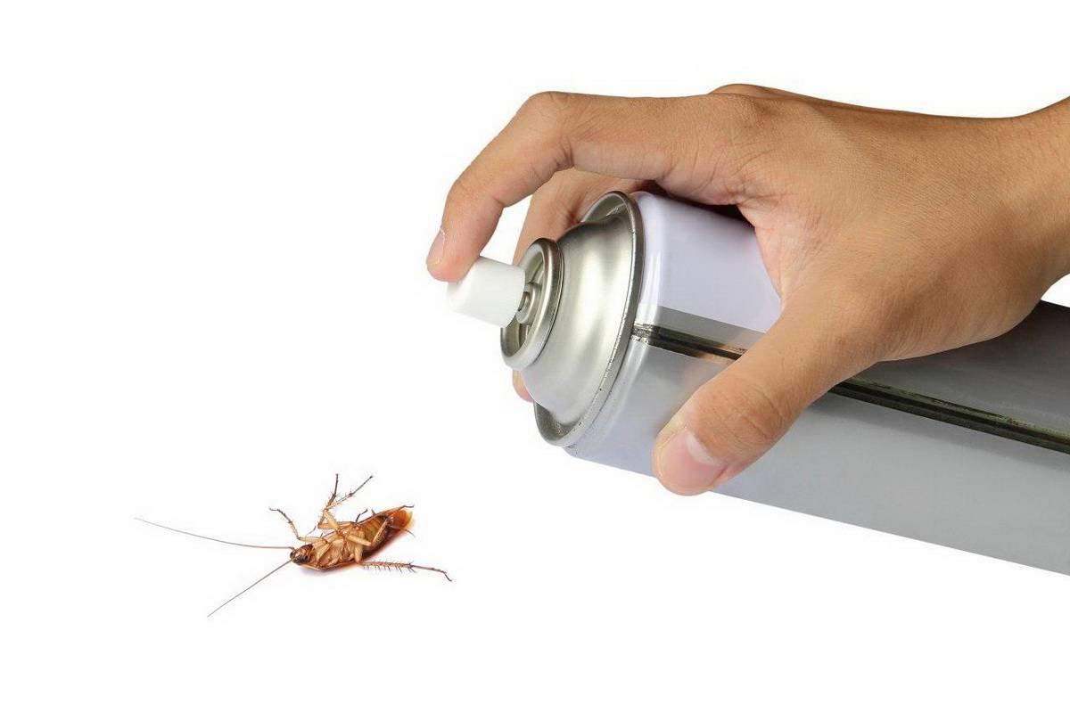Как избавиться от тараканов в общежитии быстро и навсегда?