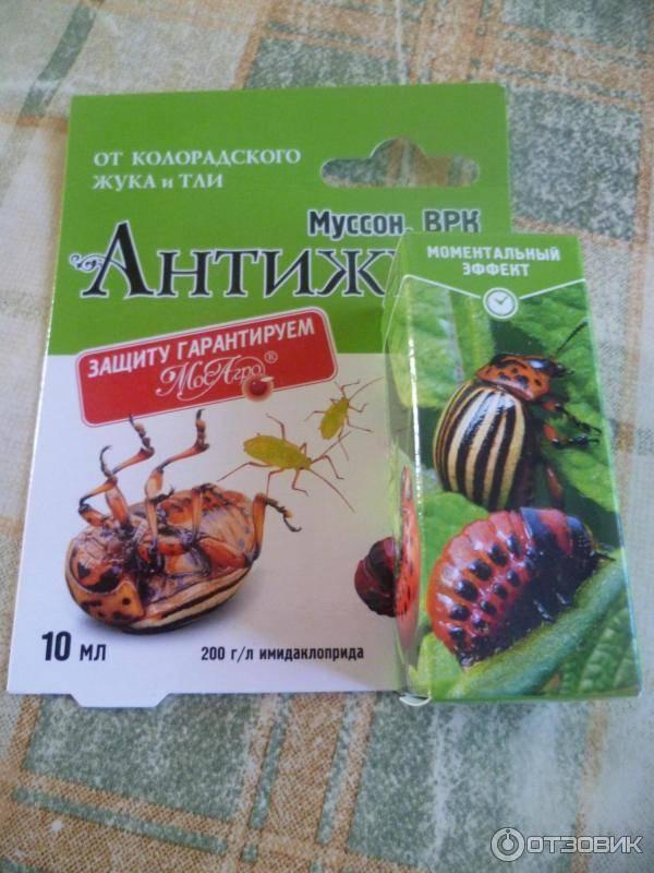 Отрава для колорадского жука: табу и престиж, инструкция и отзывы