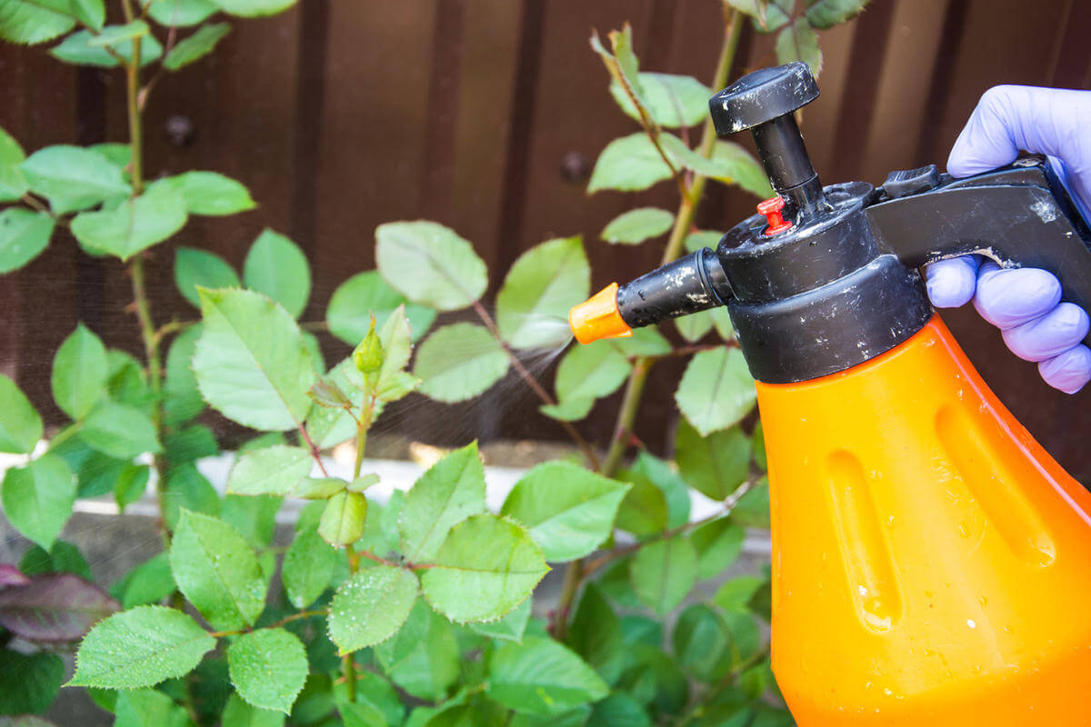 Нашатырный спирт от тли - борьба на огороде с тлей