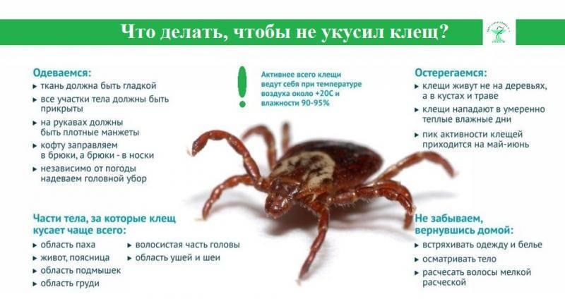 Где в россии обитают энцефалитные клещи? в каких лесах их нет, а где их очень много? откуда в россии взялось столько клещей? есть ли клещи в крыму?