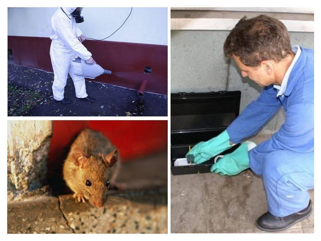 Как называется обработка помещения для уничтожения крыс?