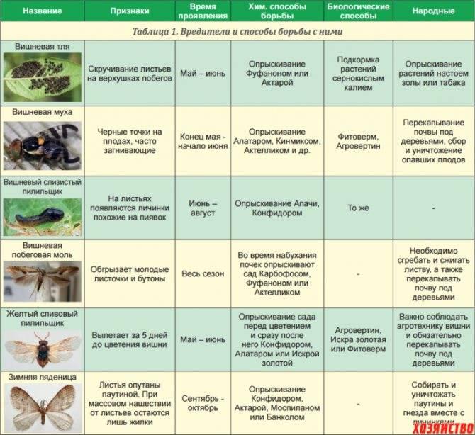 Обработка клубники от болезней и вредителей весной: когда и чем опрыскать, сроки и порядок обработки разными средствами