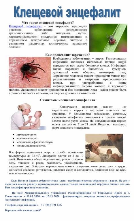 Энцефалит у собак: симптомы, лечение