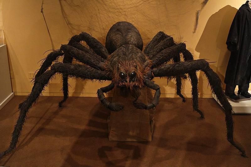 Мерзкие факты о пауках, о которых вам будет мерзко читать! (15 фото + 1 видео)