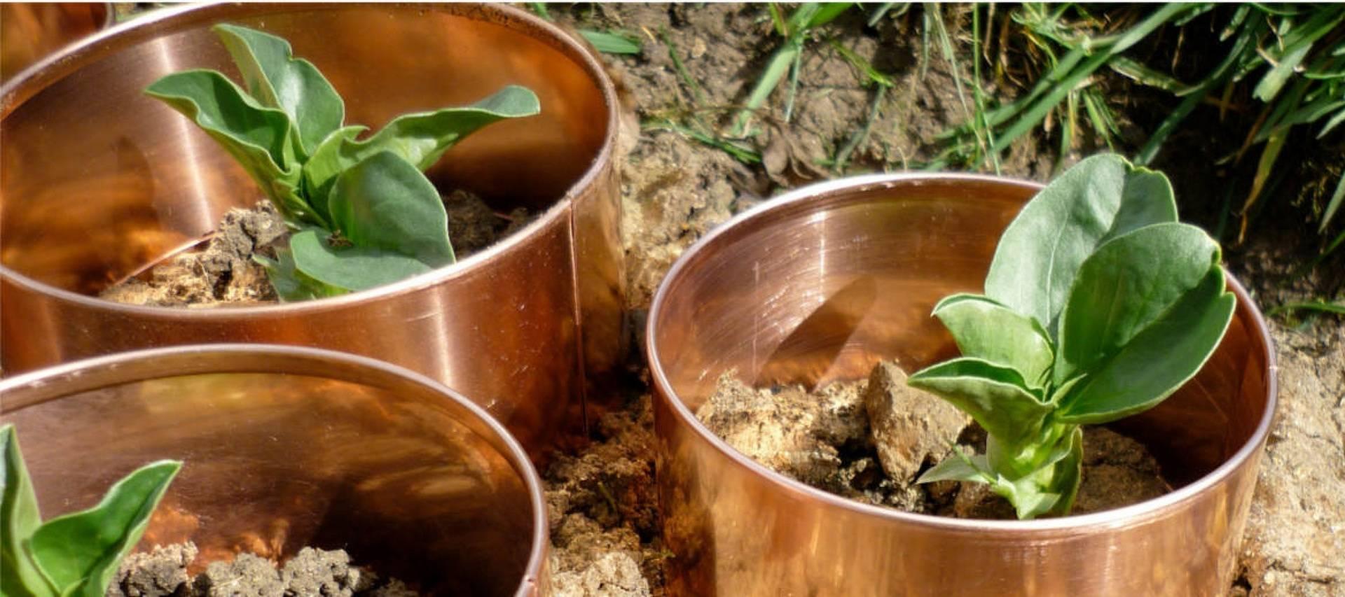 Борьба со слизнями в огороде: все средства хороши - дачные советы.ру