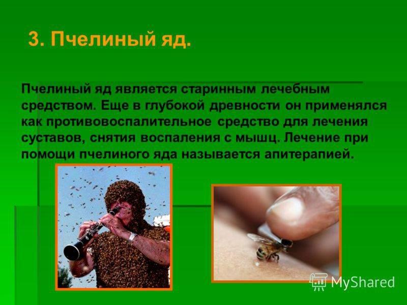 Какая польза у пчелиного яда?