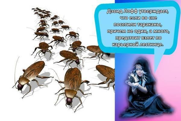 К чему снится тараканы?