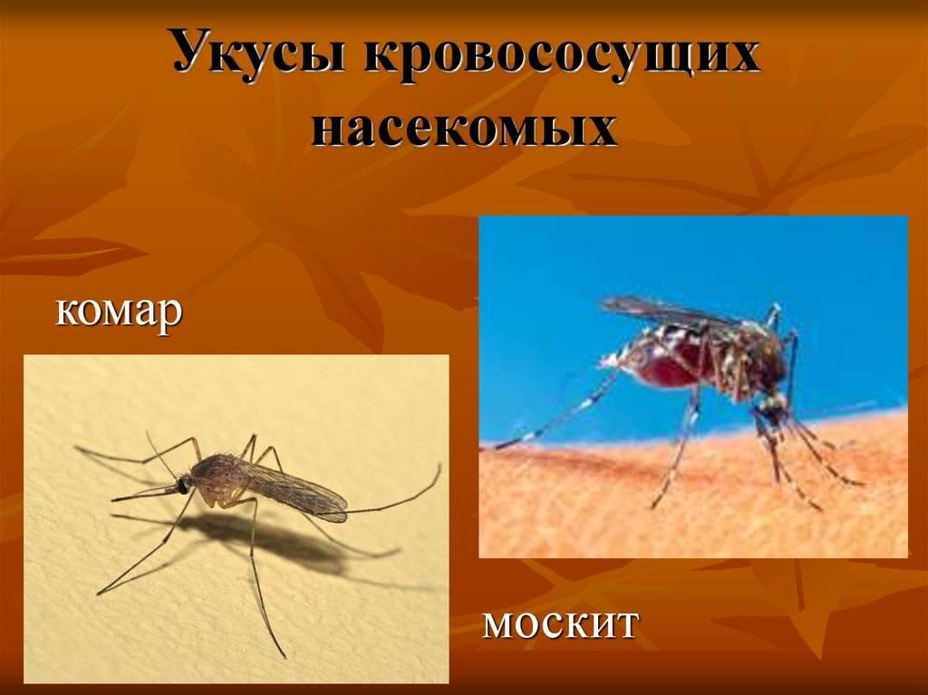 Москит: как выглядит и где обитает переносчик болезней