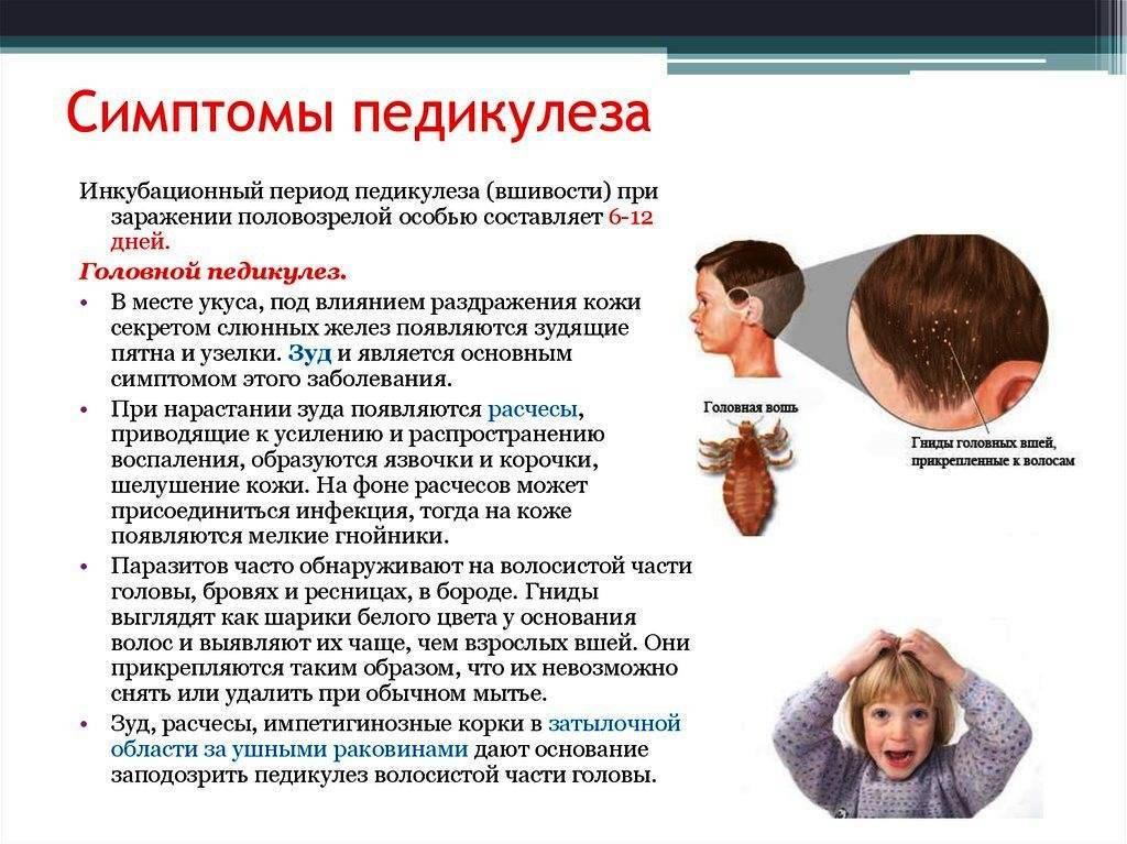 Симптомы вшей - признаки педикулеза на голове у взрослых и детей