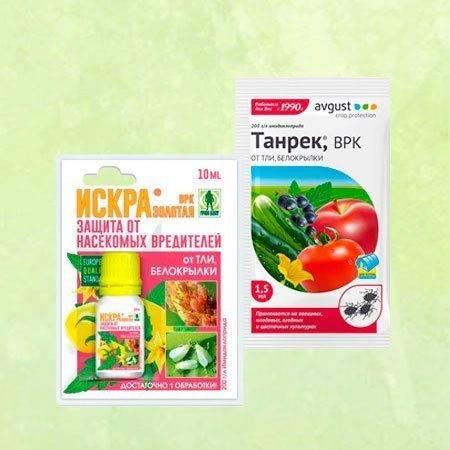 Средство от белокрылки – защита растений в теплице и на подоконнике