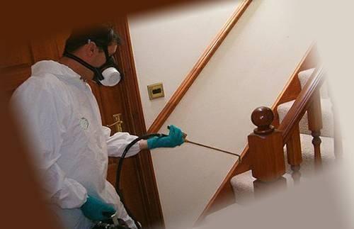 Уничтожение клопов: подготовка квартиры к дезинсекции и её обработка, как проводятся эти процедуры