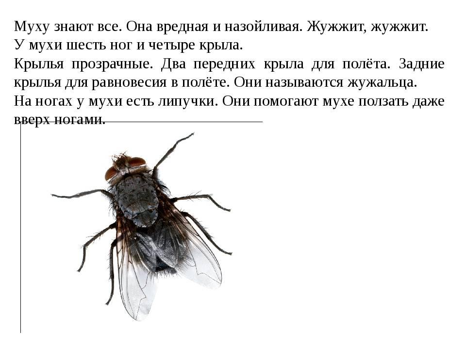 Как быстро убить муху