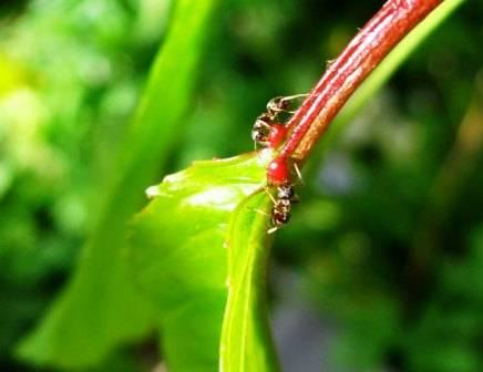 Как навсегда избавиться от муравьев на дачном участке: советы бывалых огородников